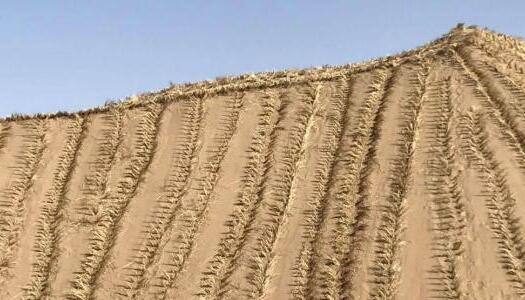 甘肃凉州持续治沙