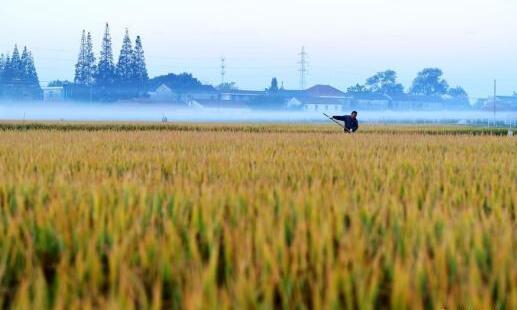 农业生产经营人员数量减少 素质提高