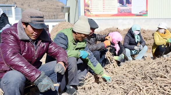 发展中药材种植  带领村民脱贫致富