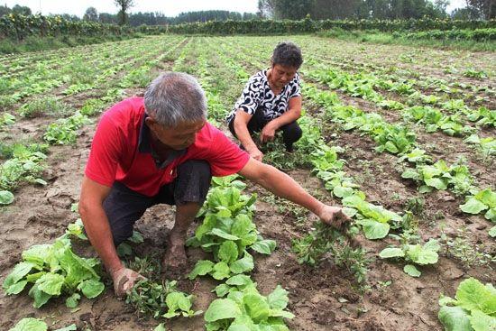 到2020年山东蔬菜播种面积基本稳定在3200万亩