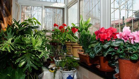 9种最适合摆放在室内的盆栽植物