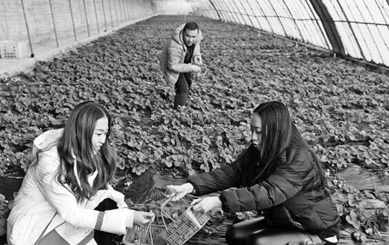 陇西县大力发展休闲观光生态农业
