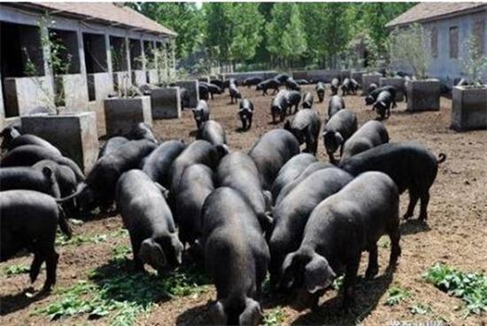 恩施州成湖北唯一国家有机农产品认证基地市州