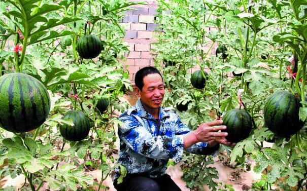 甘肃东坝农民的多彩致富梦