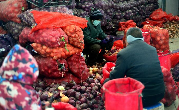 老人进城分拣蔬菜 一天装菜万斤赚80元