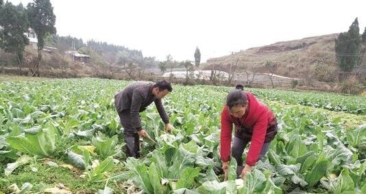 80后蔬菜大王 带领村民共致富