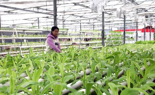 贵阳累计种植蔬菜175.5万亩 总产量242万吨