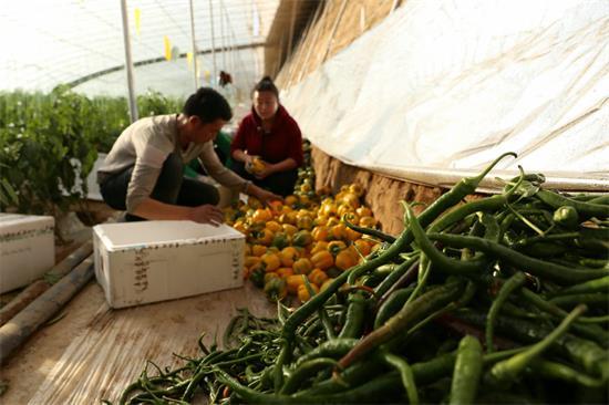 内蒙古科技智能蔬菜大棚有钱途