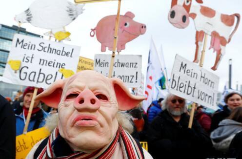 德国农民扮猪头游行要求实行生态农业