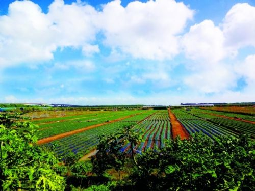 中国休闲农业高速成长 田园消费向中小城市扩散
