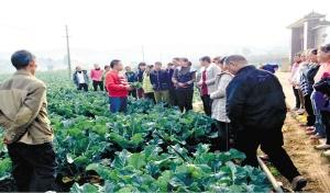 昆明西山区4年培育新型职业农民逾千人