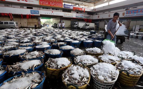去年福建水产品价格呈上涨走势 草鱼价格上涨近两成