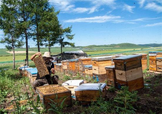 养蜂酝酿甜蜜致富路