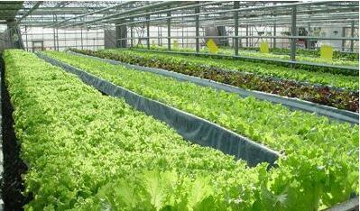 合肥都市现代农业加速跑