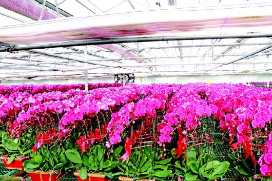 花卉产业助农增收致富