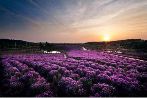 坐上美丽乡村直通车  去南京谷里买鲜花