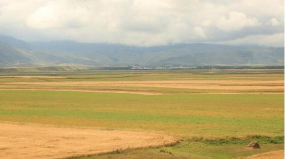 新疆昭苏高原上约百万亩春小麦