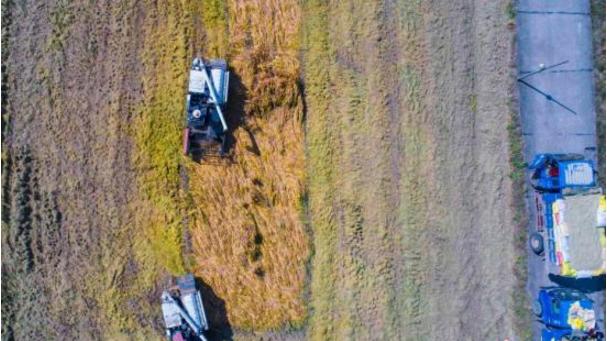 农作物的丰收景象