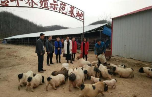 韩楼村的山羊养殖示范基地
