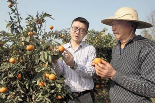 杨海和果农一起查看沃柑生长情况