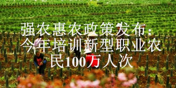 农民在贵州省普定县化处镇化新村韭黄种植基地劳作