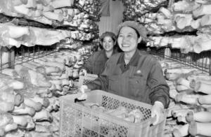 江苏灌南:农业示范园托起富民产业
