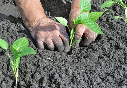 专家提醒:播撒蔬菜种子切不可大意