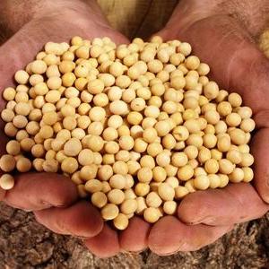 呼伦贝尔创新扩大大豆规模化生产
