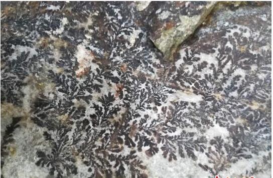 """浙江永嘉现""""假化石"""" 或形成于亿年前具观赏价值"""