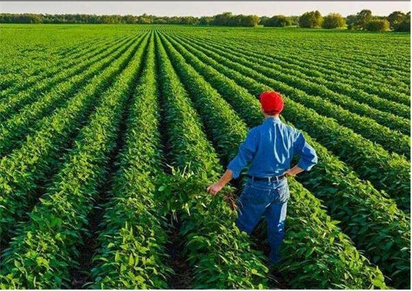 新型职业农民培育让农业有奔头 为农村添活力