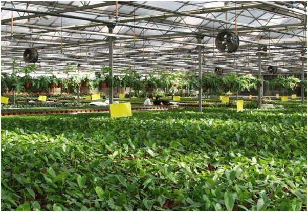 加快农业科技创新  引领现代农业发展