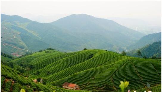 中国茶国际竞争力待提高成共识 两岸茶人话优势机遇