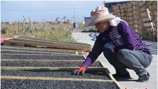 青海格尔木产业就业并重 实现长效脱贫