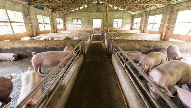 全国最大生猪交易市场带动8万户生猪养殖户增收