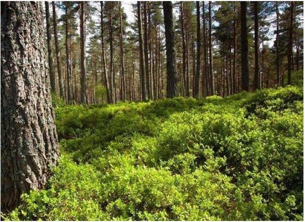 林业产权市场体系日趋完善 小农户有望受益