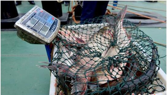 湖北破获禁渔期非法捕捞案 查获渔获物1600斤