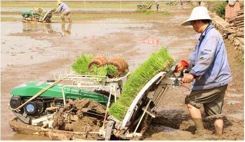水稻种植机械化发展尚有很大空间 国产插秧机龙头崛起
