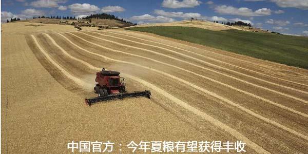 中国官方:今年夏粮有望获得丰收
