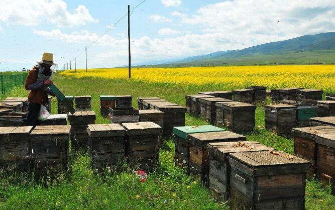 90后女孩辞职养蜂创业 助力乡村振兴发展