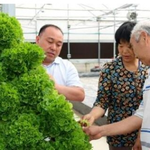 河南内乡与以色列合建高效农业示范园