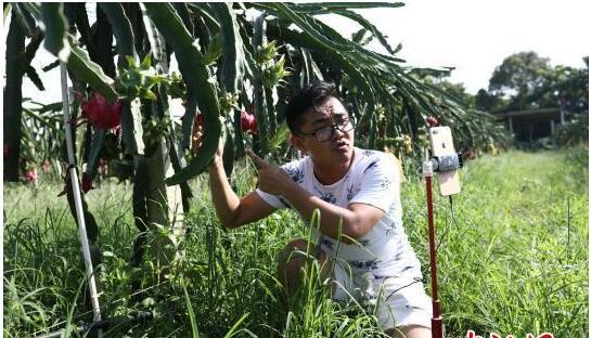 """海南""""90后""""新农人""""边吃边播""""改造水果供应链"""