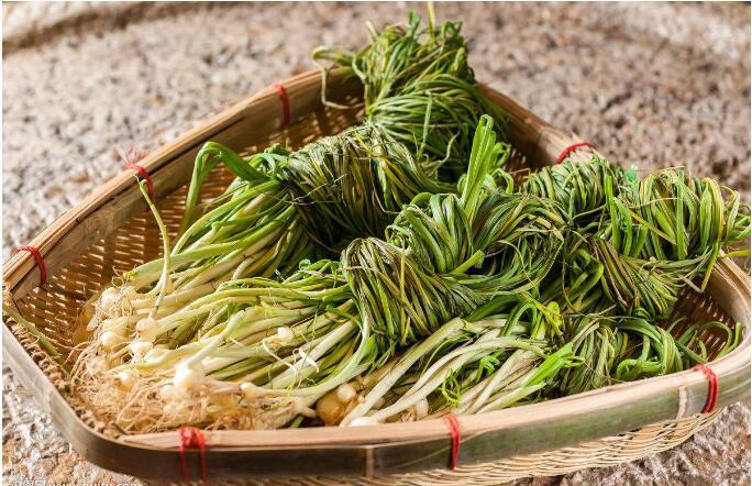 野菜营养价值高  吃野菜的四大注意事项