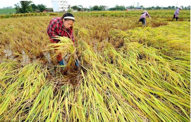 农民大实话:下发各种各样的补贴 不如直接涨粮价!