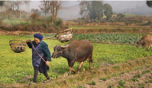 土地确权即将完成 却又推出了新花样 是否真的对农民有益?