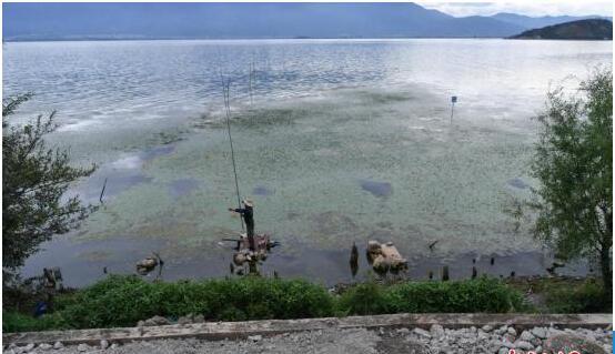 云南大理州亮剑洱海保护治理 干得慢也要担责任