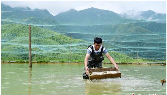 """福建德化:""""台湾泥鳅""""山间游 村民致富好帮手"""