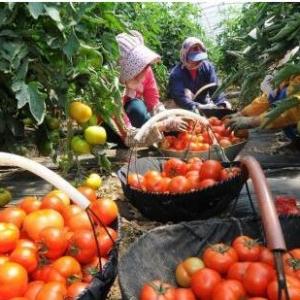 黑龙江今年绿色有机食品认证面积将突破8000万亩