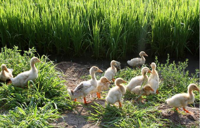 四川促进绿色畜牧业良性循环发展