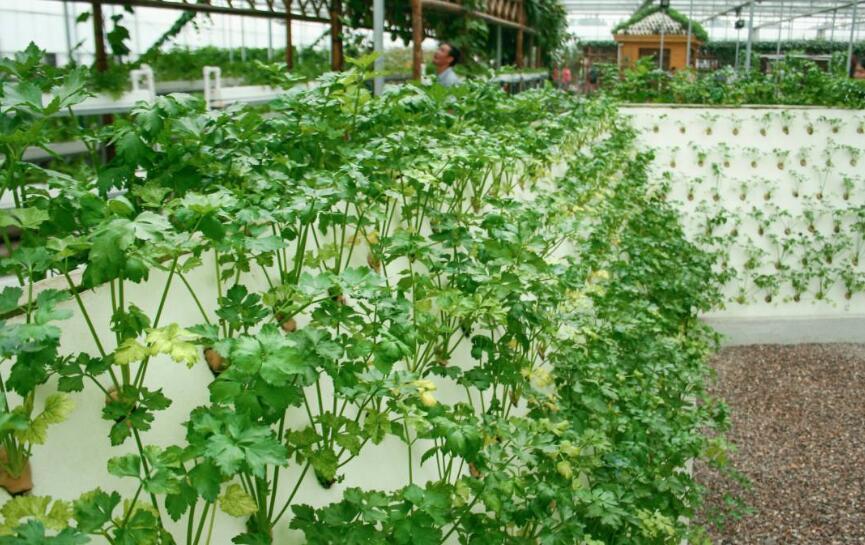 南京休闲观光农业收入 2020年要超100亿