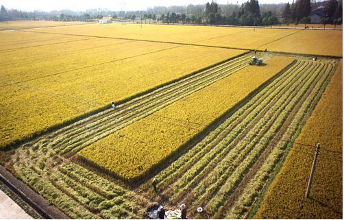 """湖北省上半年农业经济基本平稳  夏粮生产呈现""""减势"""""""